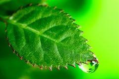 Wasser-Tropfen lizenzfreies stockbild