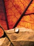 Wasser-Tropfen auf Blättern Stockbild