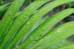 Wasser-Tropfen auf Blättern Lizenzfreies Stockbild