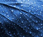 Wasser-Tropfen auf blauem Betriebsblatt Lizenzfreie Stockbilder