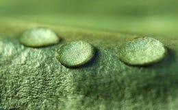Wasser-Tropfen auf einem grünen Blatt Stockbilder