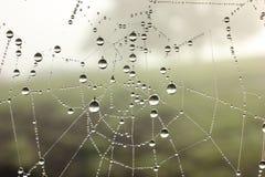 Wasser-Tropfen auf einem Netz stockfoto