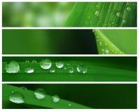 Wasser-Tropfen-Fahnen lizenzfreies stockbild