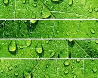 Wasser-Tropfen-Fahnen Lizenzfreie Stockfotos