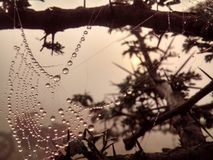 Wasser-Tropfen-Juwelen auf Spinnen-Netz stockbild