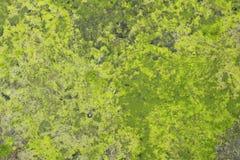 Wasser umfasste Sumpfschlammhintergrund Stockbilder