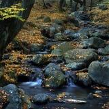 Wasser und Blätter 2. Lizenzfreies Stockbild