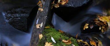 Wasser und Blätter 6 Stockbild