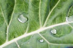 Wasser und Grün Lizenzfreies Stockfoto
