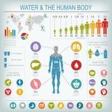 Wasser und menschlicher Körper infographic Stockbild