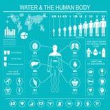 Wasser und menschlicher Körper infographic Stockfotos
