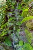Wasser und Moos stockfoto