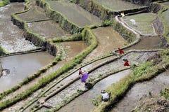 Wasser und Reis terrases lizenzfreies stockbild
