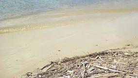 Wasser und Sand auf dem Strand stock video