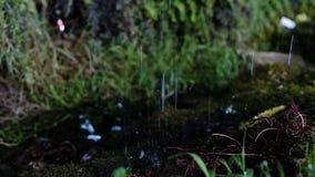 Wasser und Tropfenfänger aus den Grund, spritzt eine Duschzeitlupe stock footage