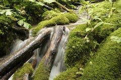 Wasser unter dem Teppich des Mooses Lizenzfreies Stockbild