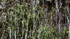 Wasser von wenigem Fluss im Wald stock footage