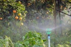 Wasser, zum der Zitrusfrucht zu bewirtschaften stockbilder