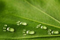 Wasserabdrücke auf Blatt lizenzfreie stockfotos