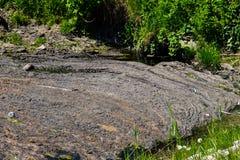 Wasserabfluß im Kanal Grünalgen in der Wasseroberfläche Stockfotos