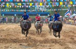 Wasserbüffel, der in Pattaya, Thailand läuft Lizenzfreie Stockfotos