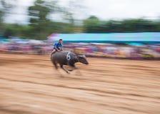 Wasserbüffel, der in Pattaya, Thailand läuft Stockbild