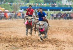 Wasserbüffel, der in Pattaya, Thailand läuft Lizenzfreies Stockbild
