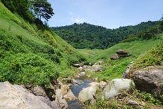 Wasserbach im Wald in Thailand Stockfotografie