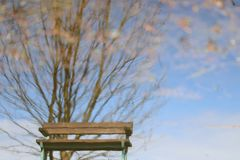 Wasserbaumbank-Reflexionsspiegelung stockbilder