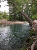 Wasserbaumfluß des natürlichen Lebens mehr Stockbild