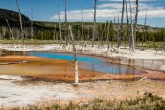 Wasserbecken der heißen Quelle, Yellowstone Nationalpark lizenzfreies stockbild
