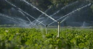 Wasserberieselungsanlagen Stockfotografie