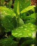 Wasserblätter stockfotografie