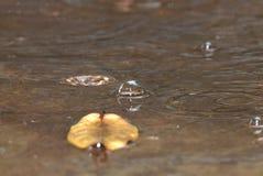 Wasserblasen von den Regentropfen lizenzfreies stockbild