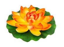 Wasserblume Lizenzfreies Stockfoto