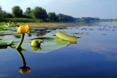 Wasserblume lizenzfreie stockfotografie