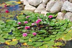 Wasserblumen Stockfotos