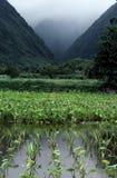 Wasserbrotwurzelbauernhof zwischen 2 Bergen Stockfotografie