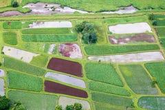 Wasserbrotwurzelfelder auf Kauai Stockfotos