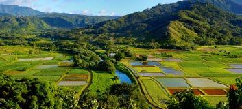 Wasserbrotwurzelfelder in schönem Hanalei-Tal auf Kauai Stockbilder