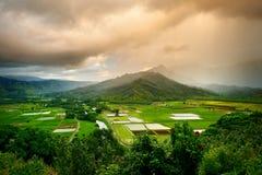 Wasserbrotwurzelfelder in schönem Hanalei-Tal auf Kauai-Insel, Hawaii Lizenzfreie Stockfotos