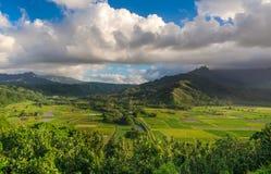 Wasserbrotwurzelfelder in schönem Hanalei-Tal Kauai, Hawaii Stockfotografie