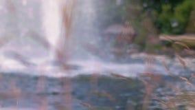Wasserbrunnen im Park Spritzen von Strömen des Brunnens in der Zeitlupe stock video footage