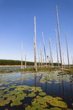 Wasserc$lil-lügen Blätter trocknen Tress Westland Landscape Stockfotos