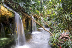 Wasserfälle in einem tropischen Garten Lizenzfreie Stockbilder