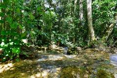 Wasserfälle EL Nicho in Kuba Lizenzfreies Stockbild