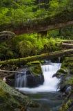 Wasserfälle und gefallene Bäume in Waldolympischem nationalem Forest Washington-Zustand Lizenzfreie Stockbilder