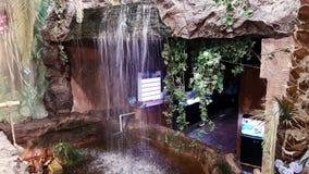 Wasserfälle und Haustiere Stockfotos