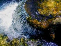 Wasserfall über Baum-Wurzel in einem Strom im Wald stockbild