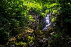 Wasserfall über einem moosigen Nebenfluss Stockfoto